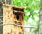 ブッポウソウ用巣箱