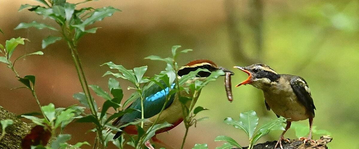 朽木 野鳥を守る会